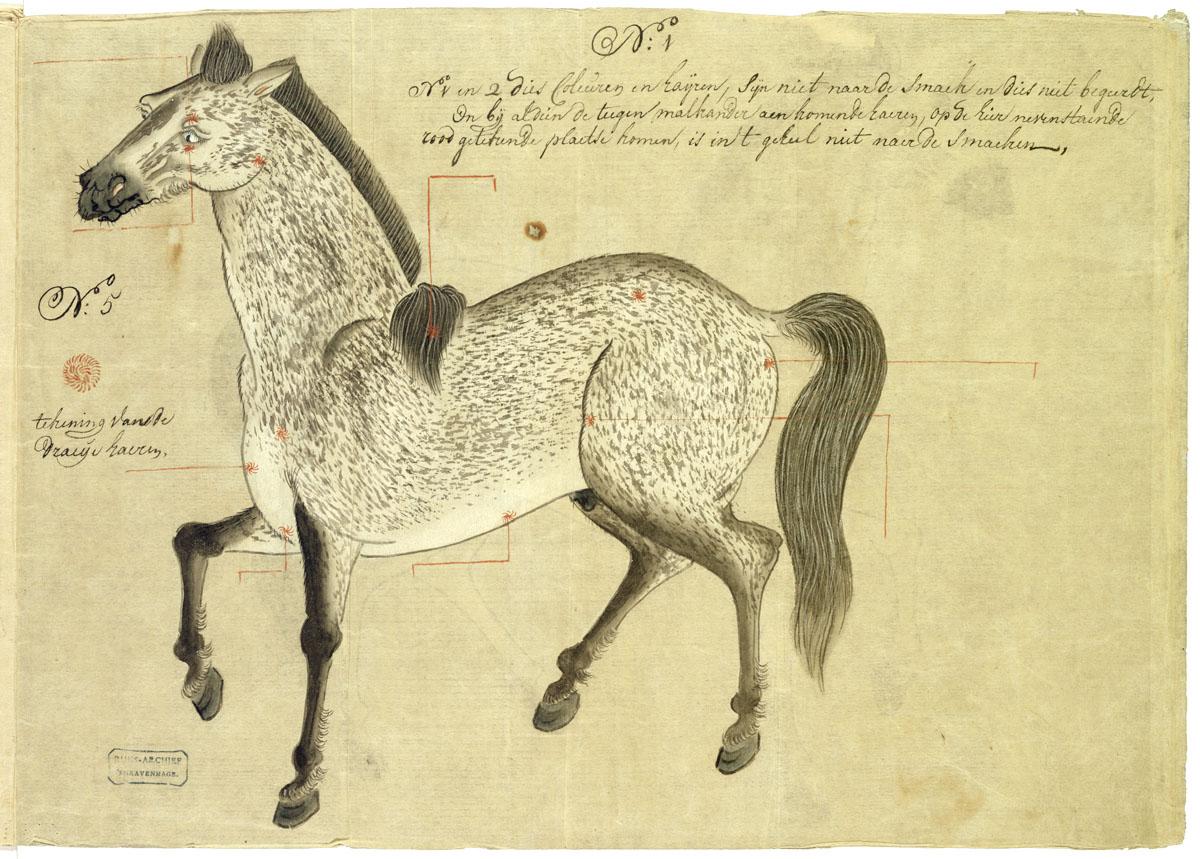 Gekleurde tekening van een grijs gestippelde hengst paard het geheugen van nederland - Grijs gekleurde ...