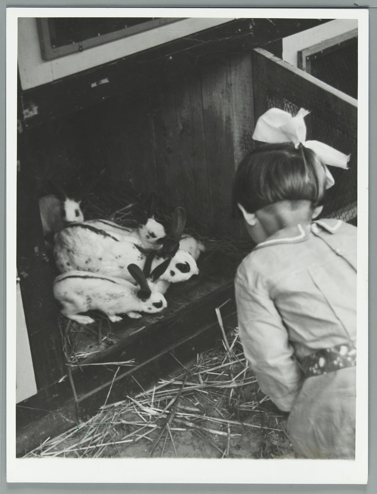 Meisje bij konijnen ras papillons in een hok het geheugen van nederland online beeldbank - Een hok ...