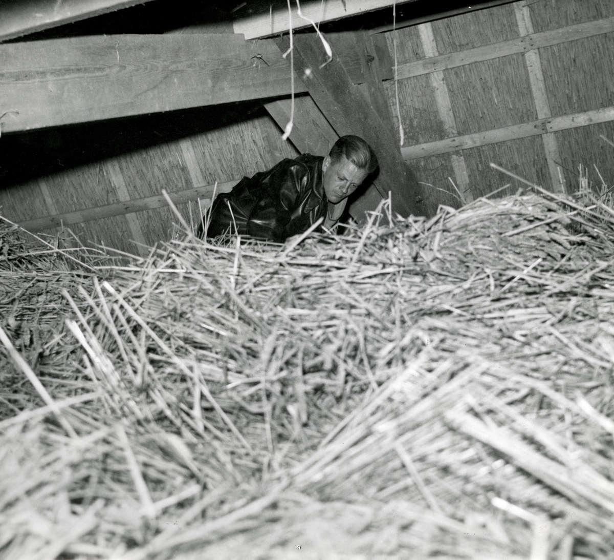 Tweede wereldoorlog een man controleert de hooizolder zonder plaats 1941 geheugen van - Klein kamermeisje ...