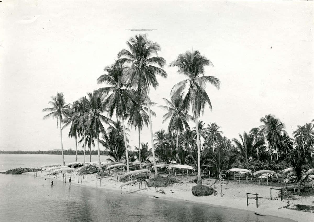 Tropische culturen klapperbomen kokospalmen aan het oosterstrand van het eiland billiton bij - Tafelhuis van het wereld lange eiland ...
