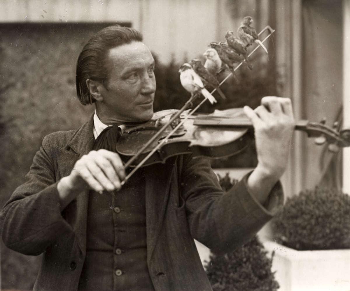 Vogels gedrag gedresseerde kanaries zittend op de strijkstok van een viool spelende man 1935 - Klein kamermeisje ...