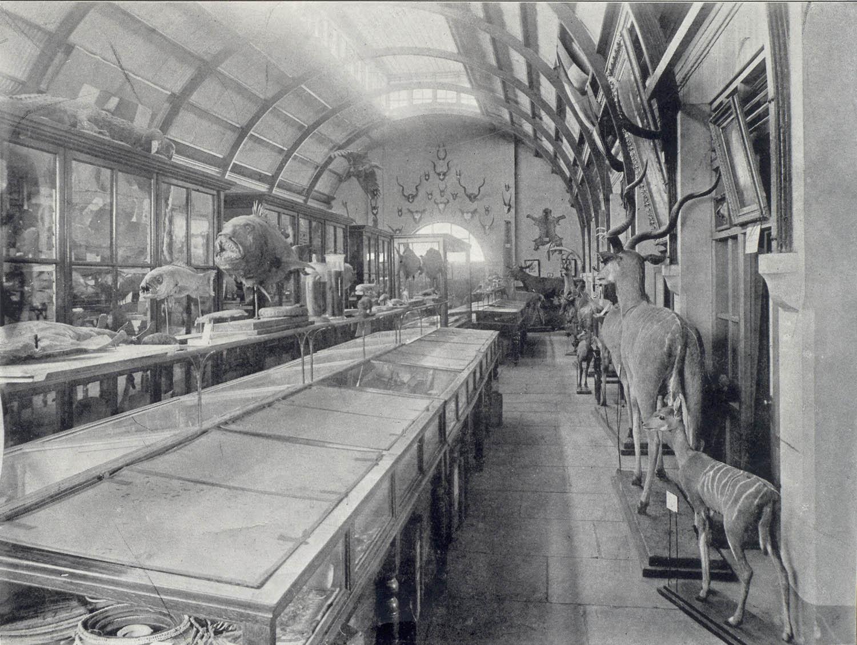 Interieur van die staatsmuseum transvaal museum in for Interieur 1900